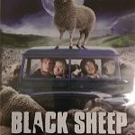 DVD - Black Sheep
